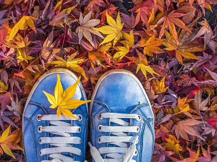 「運動の秋」の画像検索結果